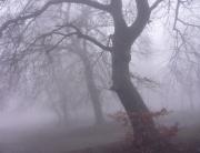 ködös 4