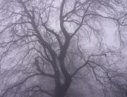 ködös 5